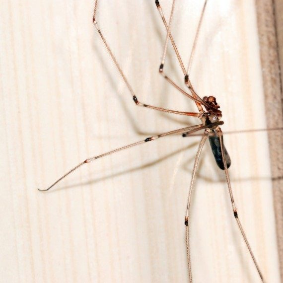 Spiders, Pest Control in Norbury, SW16. Call Now! 020 8166 9746